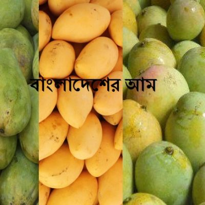 Fresh Mango Fruit Bangladesh